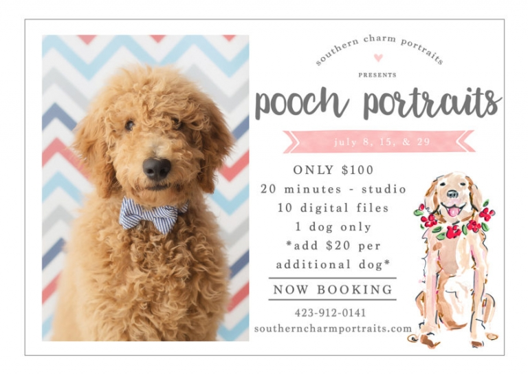 knoxville dog photographer